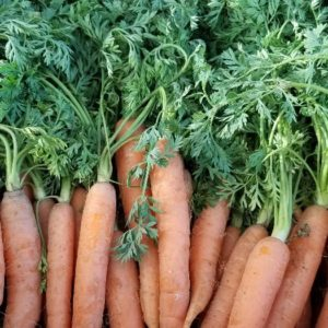 Baby Orange Carrots with Tops 1 bunch