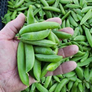 Sugar Snap Peas 1 pound
