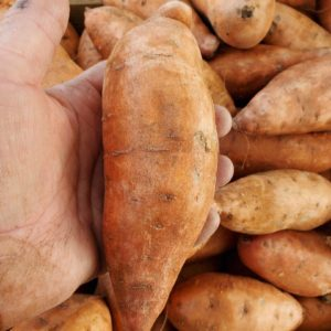 Sweet Potatoes 1 pound